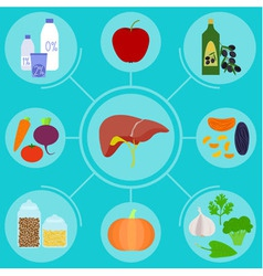 Infographics of food helpful for healthy liver vector