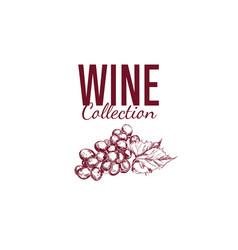 wine shop label cover 4 vector image