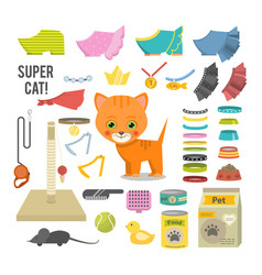 cat and accessories vector image