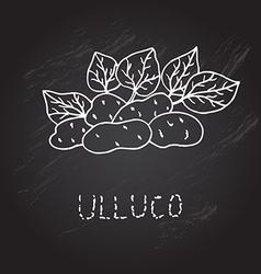 Hand drawn ulluco vector