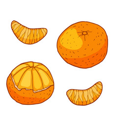 Tangerine with slices hand drawn vector