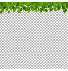 tree branches isolated vector image
