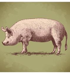 engraving big pig retro vector image vector image