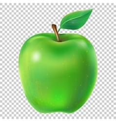 a juicy apple vector image