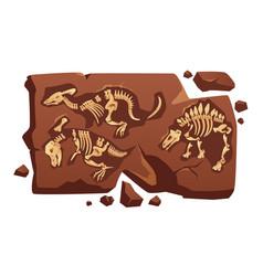 Dinosaur fossil bones dino skeletons in stone vector