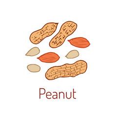Peanuts hand drawn vector