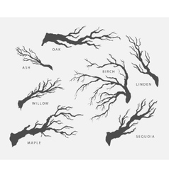 set of branches twigs of different trees vector image
