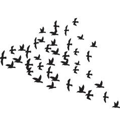 A Flock of Birds vector image vector image
