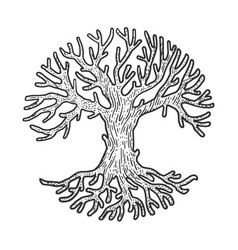circle crown tree sketch vector image