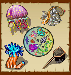 Inhabitants underwater world and microorganisms vector