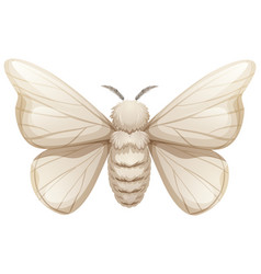 Silkworm on white background vector
