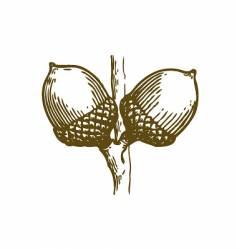 acorns sketch vector image vector image