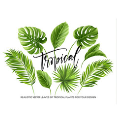 tropical palm leaves set isolated on white vector image