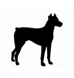 Doberman pinscher vector image vector image
