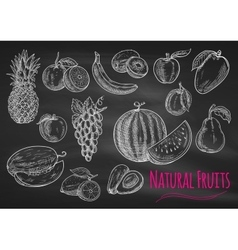 Fruits chalk sketch icons on blackboard vector
