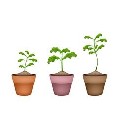 Three Green Trees in Terracotta Flower Pots vector