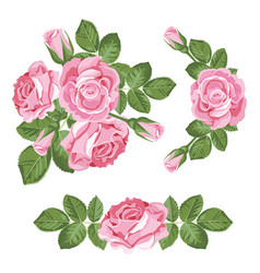 Set collection of pink roses with leaves isolated vector