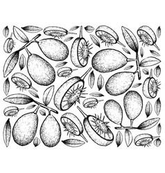 Hand drawn background of fresh ambarella fruits vector