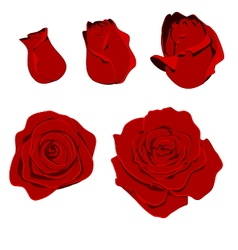 Rose shape vector