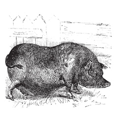 Heudes Pig engraving vector image vector image