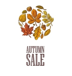 Poster autumn sale with set leaf and acorn vector