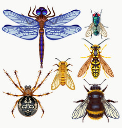 Set insects top view vector