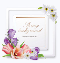 spring background with tulips crocuses anemones vector image