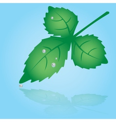 Green leaf and dew eps10 vector