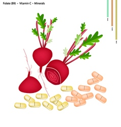 Beetroot with Vitamin C B9 and Minerals vector