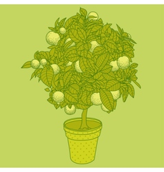 Citrus tangerine orange or lemon citrus tree vector