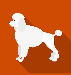 poodle icon in flat style for web vector image