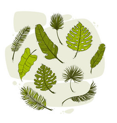 set tropical leaves hand drawn botanical vector image