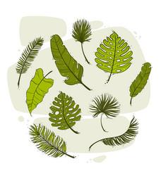 set tropical leaves hand drawn botanical vector image