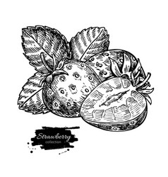 strawberry drawing isolated hand drawn vector image