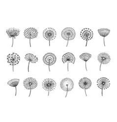 dandelion set doodle hand drawn dandelions vector image