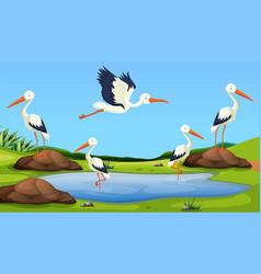 Egret migration to pond vector