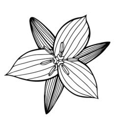 Flower 209 16 vector