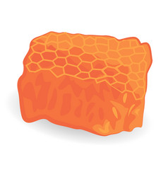 Honey comb isolated vector