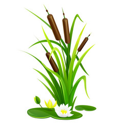 Reed bush thicket plant vector