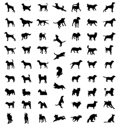 races of dogs vector image