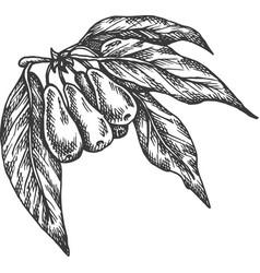 Goji berries hand drawn sketch fruit vector