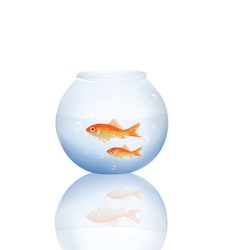 goldfish in water vector image