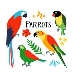 Set tropical parrots with palm leaf and vector