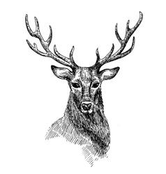 sketch deer vector image