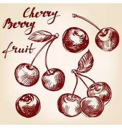cherry set hand drawn llustration realistic vector image
