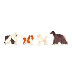 Dog breeds bobtail cavalier king charles spaniel vector