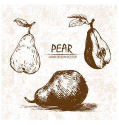 digital detailed pear hand drawn vector image