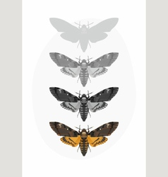 Butterfly Deaths head Hawk moth Set vector image vector image