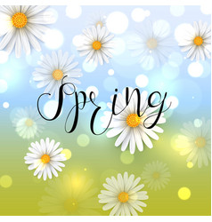 beautiful spring background with chamomile flower vector image
