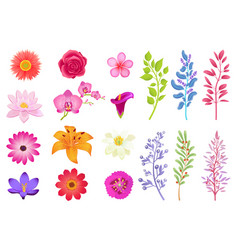 Bright gorgeous flowers and wild useful herbs vector
